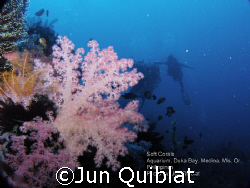Soft Coral at Duka Bay by Jun Quiblat