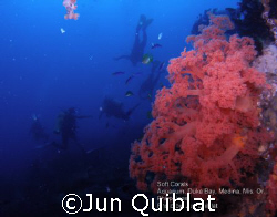 Soft Coral with divers in Duka Bay by Jun Quiblat