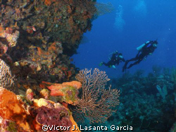 in the ledge of a new place in parguera,,,,come and dive! by Victor J. Lasanta Garcia