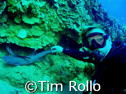 Diver and buddy.  I've watched these two white tip sharks... by Tim Rollo