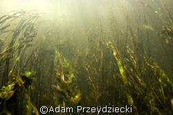 river run by Adam Przeÿdziecki