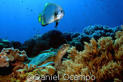 Dive Buddies