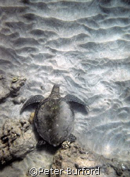 Turtle on the Sand.