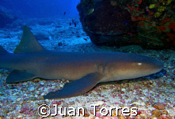 Nurse shark at Monito Island.  Canon S70 and Sealife Digi... by Juan Torres
