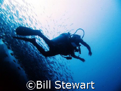 My dive guide and schooling Trevally along the House Reef... by Bill Stewart