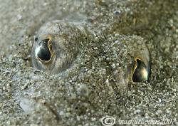 Eyes - a plaice buried in the sand at Aughrusmore, Connem... by Mark Thomas