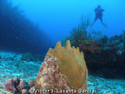 my friend fernando roura in the new dive site at parguera... by Victor J. Lasanta Garcia