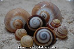 nikon d200 shell shot by Joanna Crystal Buenafe