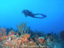 flying high at chimney dive site in parguera wall,,,com... by Victor J. Lasanta Garcia