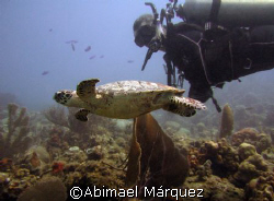 Hawksbill Turtle, St. John, U.S.V.I. by Abimael Márquez