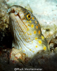 Looking About - Image taken in Bonaire with a Nikon D100,... by Mark Westermeier
