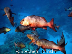 First Shot on the Great Barrier Reef. Taken with a Powers... by Stephen Holinski