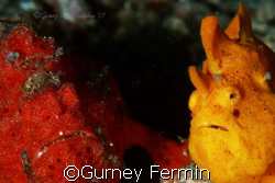 Shot taken at Davao using a Canon 400d w/ a sea and sea h... by Gurney Fermin