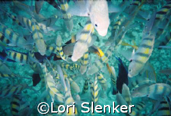 Fish feeding below me as I snorkeled. by Lori Slenker