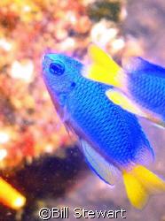 """""""Neon Damsel""""  This shot was taken October 14, 2007 at 9:... by Bill Stewart"""