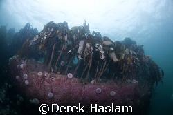 Kelp. Farne islands. D200, 10.5mm. by Derek Haslam