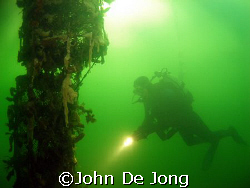 The green colour is tipical for the  Dutch waters. My bud... by John De Jong