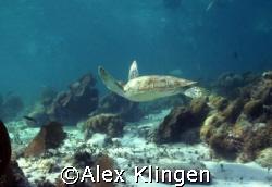Flying on the  Barrier Reef, Belize by Alex Klingen