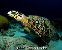 Lift Off - Image taken in Bonaire with a Nikon D100, 18mm... by Mark Westermeier