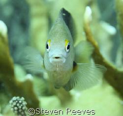 Picture taken in Bonaire not Aruba Reef fish by Steven Reeves