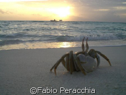 A crab at sunset by Fabio Peracchia