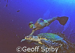 freediver and turtle by Geoff Spiby