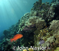 Fury shoals. by John Naylor