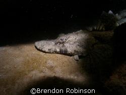 crocadile fish by Brendon Robinson