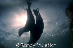 San Pedro Island ,Mexico - sea&sea motor marine by Randy Vuletich