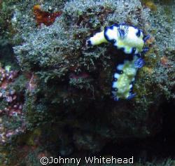 Sea slugs in love. by Johnny Whitehead