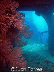Marine life seizes the remains of the WIT SHOAL.  Taken w... by Juan Torres