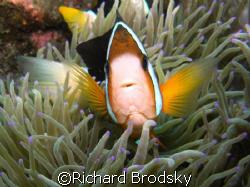 Captain Nemo by Richard Brodsky