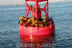 ''Sea Lion Condo.''   nikon D200 by Randy Vuletich
