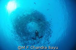 Jack fish - liberty Wreck, Tulamben by M F Chandra Bayu