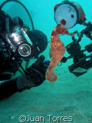 My diving buddy Abimael trying to get a good shot of a Se... by Juan Torres