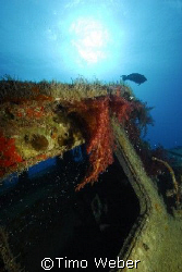 "Wreck of the ""Excalibur"", Hurghada, Red Sea, October 2007 by Timo Weber"