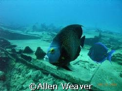 The Ora Verde, Cayman Island by Allen Weaver