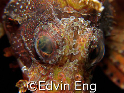 Eye to Eye! Taken in Anilao with Canon G9. by Edvin Eng