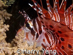 2007/12/01 by Harry Yang