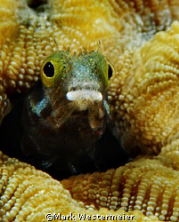 Peering Out - Image taken in Bonaire with a Nikon D100, 1... by Mark Westermeier