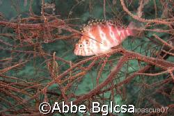 Like a bird perching on a tree.  Malapascua, Cebu by Abbe Bglcsa