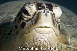 Picture taken in Naa'ma Bay, Sharm el sheikh by Stephan Kerkhofs