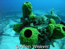Ora Verde by Allen Weaver
