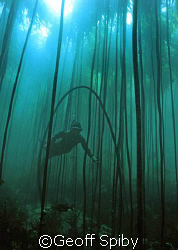 snorkelling in a kelp forest by Geoff Spiby