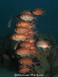 School of Blackbar Soldierfish, Crash Boat, Aguadilla, P.R. by Abimael Márquez