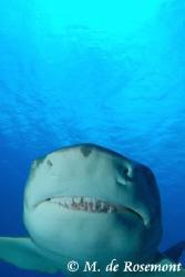 Lemon Shark's jaw (Tapu - Borabora). Sea&sea housing, Ni... by Moeava De Rosemont