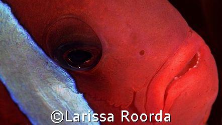 Eye-to-eye by Larissa Roorda