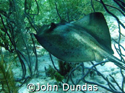 shot taken on a live aboard in the Bahamas. I was amazed ... by John Dundas