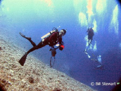This was shot on 11 December 2007, at a divesite known as... by Bill Stewart