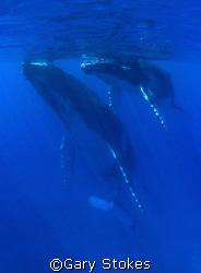 Oceanic Love by Gary Stokes